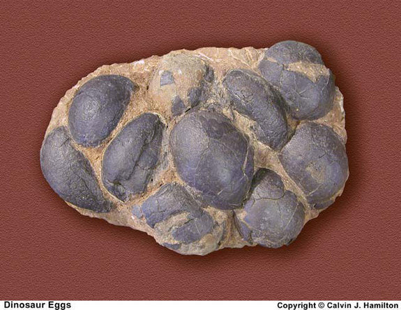 Many fossilized dinosaur eggs have been found, at over 200 sites around the world.